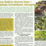 Zlatna žutica vinove loze – prijetnja hrvatskom vinogradarstvu