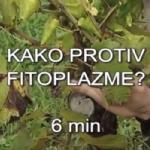 VIDEO: Zlatna žutica vinove loze - Flavescence dorée