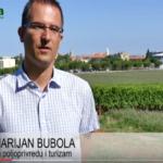 VIDEO: Simptomi, štete i suzbijanje zlatne žutice vinove loze