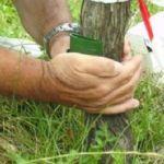 Une perfusion contre les maladies du bois de la vigne