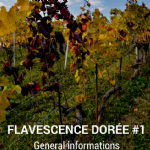 Video Clip - Flavescence Dorée #1 - General informations