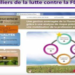 Predavanje: Iskustva u suzbijanju zlatne žutice vinove loze stecena na podrucju Francuske