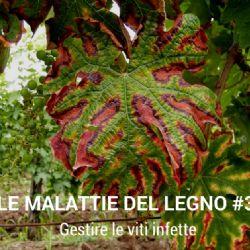 Video Clip - Malattie del Legno della Vite #3 – Gestire le viti infette