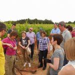 U suzbijanju američkog cvrčka moraju sudjelovati svi vinogradari