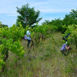 Terenski dio radionice - zapušteni vinograd