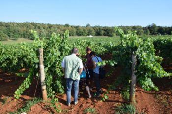 Video isjecak: Francuski poljoprivredni stručnjaci u posjeti istarskim vinogradarima