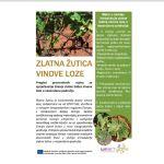 Pregled preventivnih mjera za sprječavanje širenja zlatne žutice vinove loze u nezaražena područja
