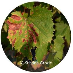 2# Suzbijanje bolesti drva vinove loze