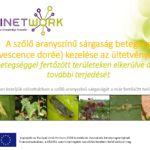 A szolo aranyszínu sárgaság betegség (Flavescence dorée) kezelése az ültetvényekben (PPT)