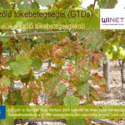 A szőlő tőkebetegségei (GTDs) - #1 szekció
