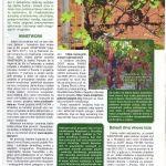 Najnovija saznanja o znacajnim i aktualnim bolestima vinove loze